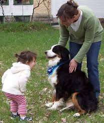 introducing dogs to children - sage child care